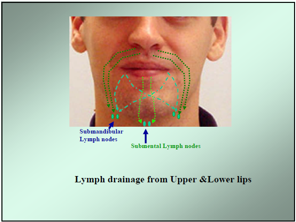 Lymphatic system-Lymphatic drainage of oral cavity