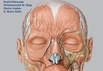 Anatomy for Plastic Surgery of the Face Head and Neck PDF